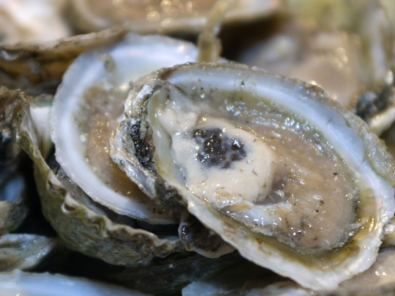 Tres proyectos de innovación sobre congrio, ostras y chorito ejecutará CAPIA