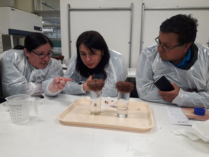 CAPIA UST, difunde técnicas para el repoblamiento de recursos bentónicos