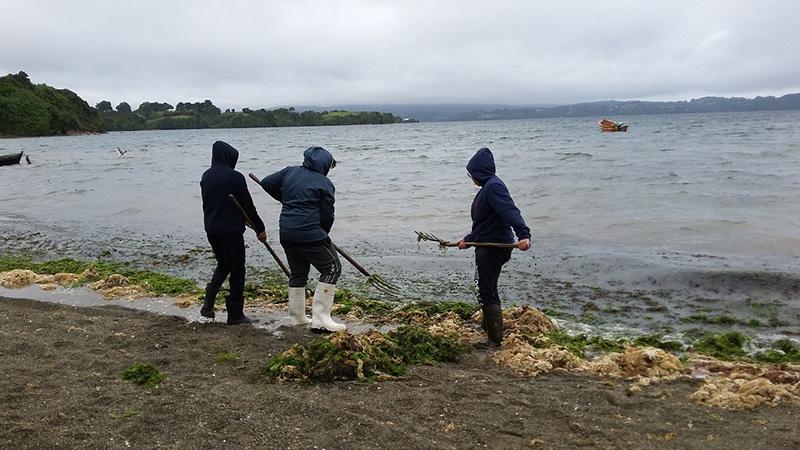 Estudiantes de Ancud conocen científicamente las virtudes y usos de los recursos del mar