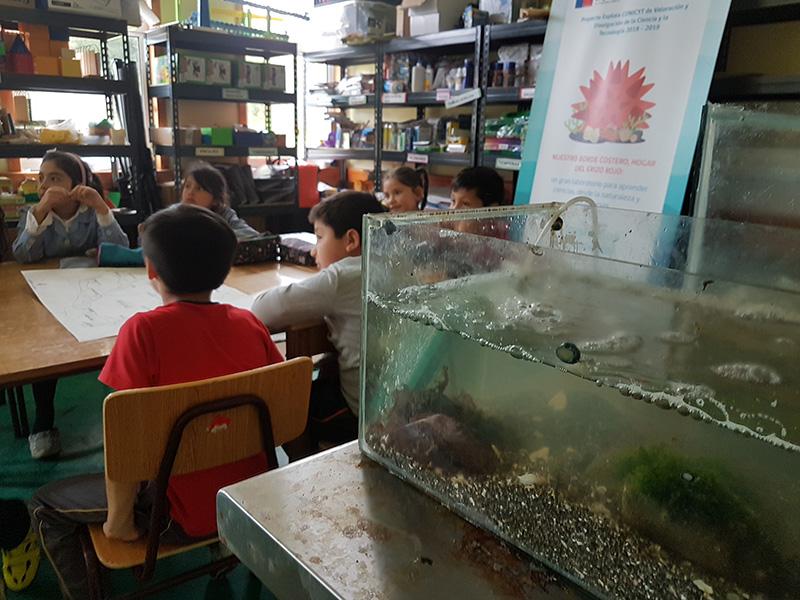 Con acuarios escuela de Isla Huar reforzará su trabajo de Investigación sobre borde costero