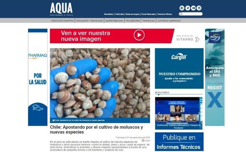 Chile: Apostando por el cultivo de moluscos y nuevas especies