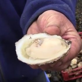 festival de la ostra