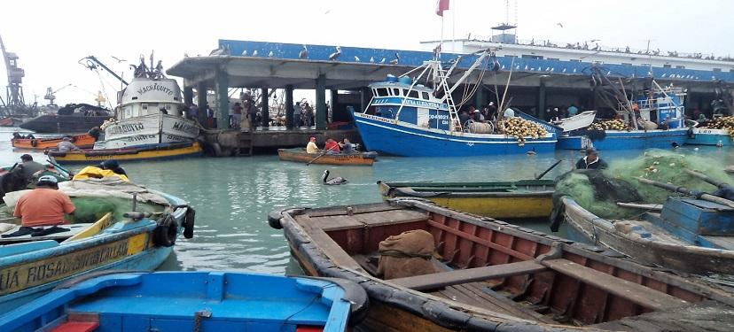 Modelo de manejo integral para la sustentabilidad de las pesquerías bentónicas de la zona sur de Chile: 1.- Pesquería de almeja (Venus antiqua)